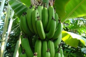 RWANDA | Value Chain Opportunity Analysis for Smallholders